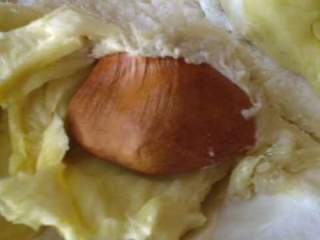 durian, seed